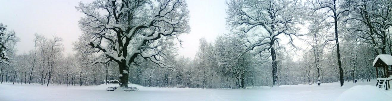 Panorama, park-šuma Adica, foto AK MARATON VUKOVAR