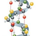 protein-molekularni-prikaz